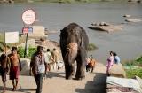hampi_baignade_elephante-8