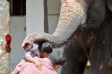 hampi_elephante_lakshmi-7b