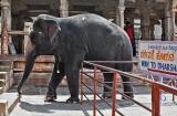 hampi_elephante_lakshmi-9