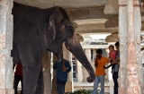 hampi_elephante_lakshmi-9c