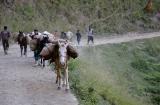 kashmir_perhagam_cheval-4