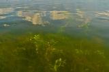 kasmir-srinagar-le-lac-balade-5