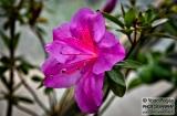 ooty_jardin_botaniqueb-2