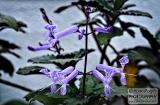 ooty_jardin_botaniqueb-3