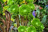 ooty_jardin_botaniqueb-4