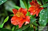 ooty_jardin_botaniqueb-5