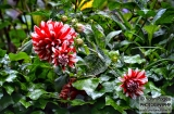 ooty_jardin_botaniqueb-8