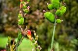 ooty_jardin_botaniqueb-9