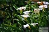 ooty_jardin_botaniquec-1