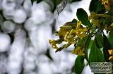 ooty_jardin_botaniquec-2