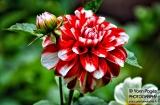 ooty_jardin_botaniquec-5