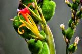 ooty_jardin_botaniquec-9