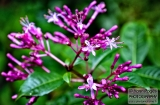 ooty_jardin_botaniqued-1