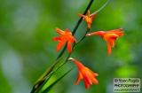 ooty_jardin_botaniqued-2