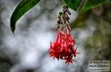 ooty_jardin_botaniqued-3