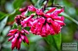 ooty_jardin_botaniqued-9