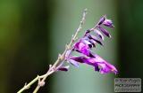 ooty_jardin_botaniquee-1