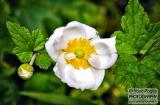 ooty_jardin_botaniquee-2