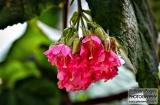 ooty_jardin_botaniquee-6