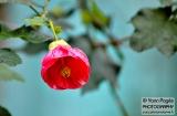 ooty_jardin_botaniquee-7