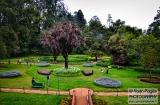 ooty_jardin_botaniqueg-2