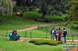 ooty_jardin_botaniqueg-3
