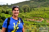 ooty_plantations_the-2b