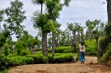 ooty_plantations_the-5