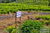 ooty_paysannes_champs-6