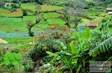 ooty_village_dejeuner_verdure-4