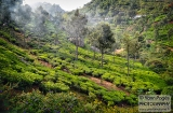 ooty_paysages-9e