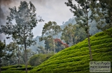 ooty_paysages-9f
