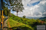 ooty_paysages_et_train-2