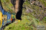 ooty_paysages_et_train-3