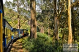 ooty_paysages_et_train-4