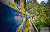 ooty_paysages_et_train-6