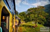 ooty_paysages_et_train-9e