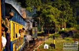 ooty_paysages_et_train-9f